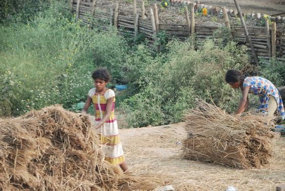 인도의 시골 농가에서 일하고 있는 아이들. 싯다르타는 재가의 삶에는 늘 먼지가 끼어 있다고 했다.