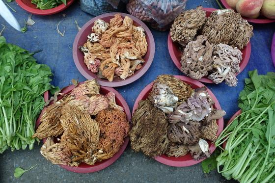 지난 2일 봉화 오일장에는 송이는 나오지 않았고 싸리버섯만 보였다. 왼쪽 노란빛이 도는 것은 독성이 있어 삶고 2~3일 우려야 먹을 수 있는 잡싸리버섯이고 오른쪽은 참싸리버섯이다.