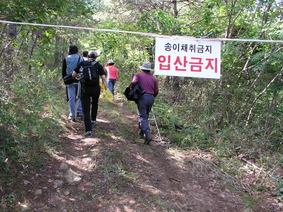 청송에 있는 친구의 산에서 송이 캐기 체험을 하기 위해 금지선을 넘어 들어가는 일행(2005년 9월 23일).
