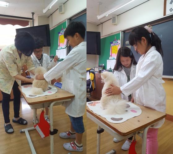 3학년 2반 김성준·변재승군과 김채연·서다은양(이하 9세)이 직접 '하니'의 심장 박동 수를 재 보고 있다. 최은경 기자