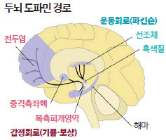 두뇌 도파민 경로. [중앙포토]