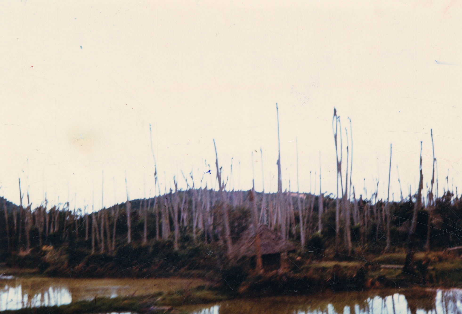 미헬기로 고엽제가 살포된뒤 앙상한 나뭇가지만 남은 베트남 정글 풍경. [중앙포토]