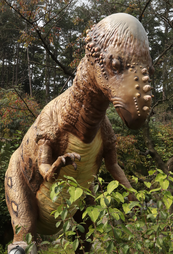 일명 박치기공룡이라고도 불리는 파키케팔로사우루스. 북아메리카에서 발견된 초식공룡이다. 불룩 튀어나온 머리뼈와 머리주위 돌기가 특징이다. 이천=최승식 기자