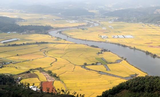 추석 황금연휴 마지막날인 9일 황금벌판을 이룬 충남 예당평야 주변으로 예당호가 유유히 흐르고 있다. [중앙포토]