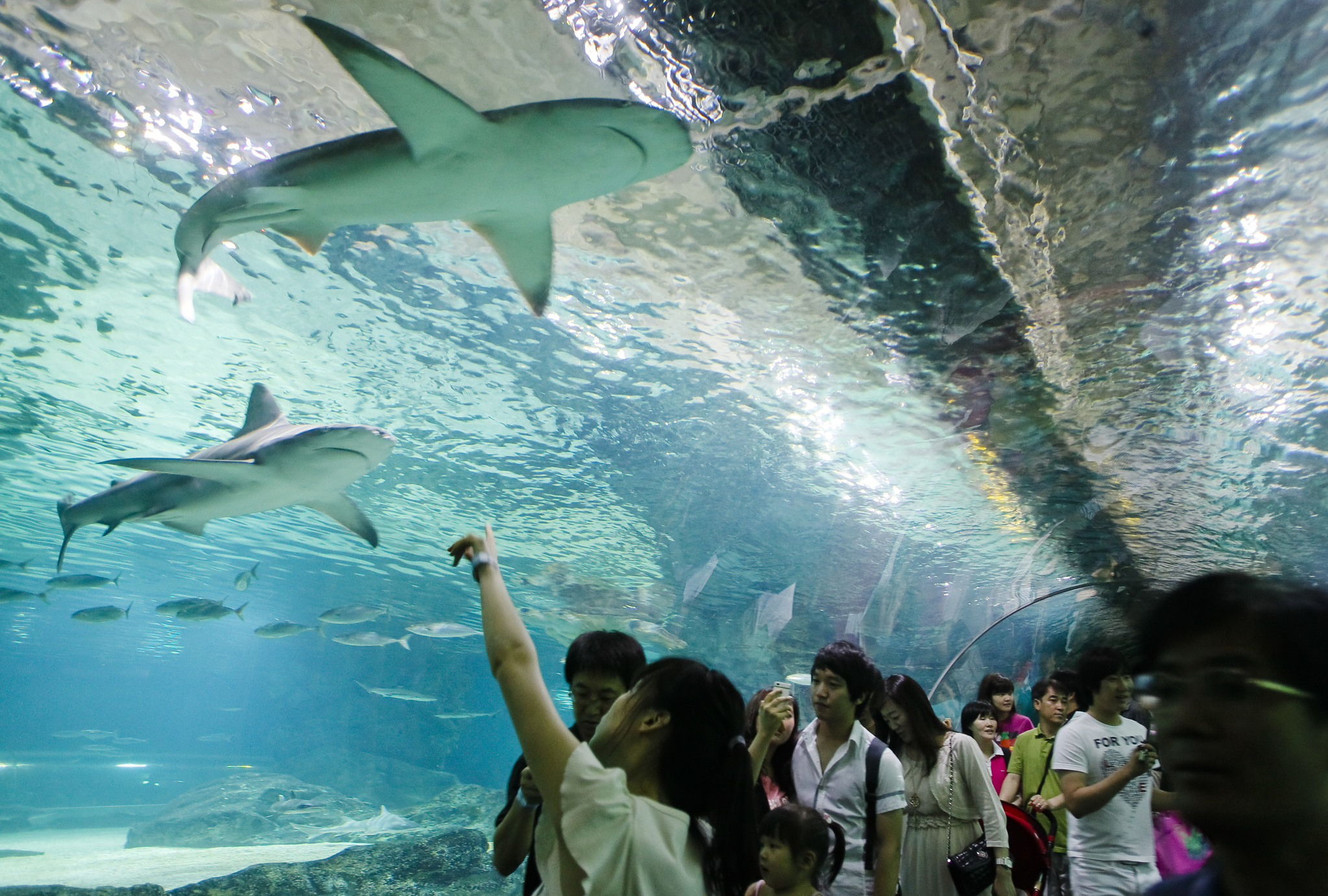 서울 삼성동 코엑스 아쿠아리움에서 상어가 나는 것 처럼 보인다. [중앙포토]