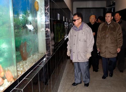 지난 2008년 평양 중앙동물원의 수족관을 김정일 국방위원장이 보고 있다 . [사진 마더 네이처 네트워크 ]