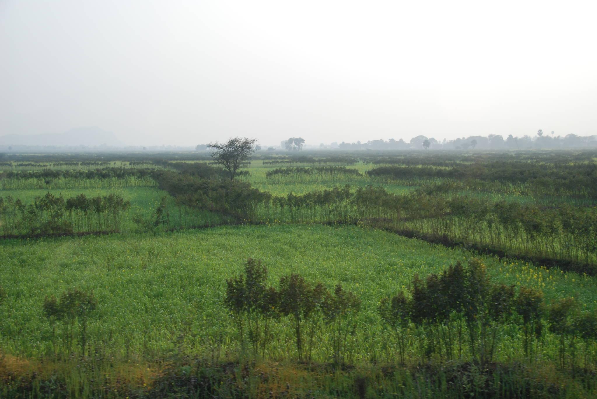 인도 보드가야의 푸른 들판. 저 멀리 나무들이 우거진 숲이 보인다. 평야가 많은 인도에서는 산이 드물다. 백성호 기자
