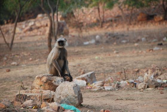 유영굴 앞에는 야생 원숭이들이 계속 들락거렸다. 순례객의 음식을 빼앗아 달아나기도 했다. 백성호 기자