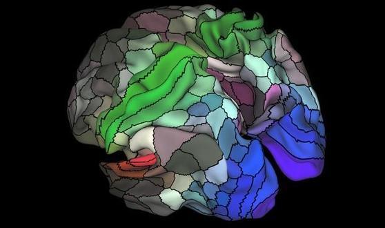 2016년 7월, 미국 워싱턴대와 영국 옥스퍼드대 등 국제공동연구팀이 대뇌피질을 180개 영역으로 나누고, 각 영역의 기능을 정리한 뇌지도 [사진 Matthew Glasser, David Van Essen, Washington University]