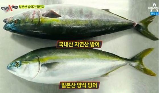 지난해 2월 채널A 방송프로그램 '먹거리 X파일'에서는 일본산 방어가 국내산 방어로 둔갑해 팔리고 있다는 의혹을 제기했다. [채널A 캡쳐]