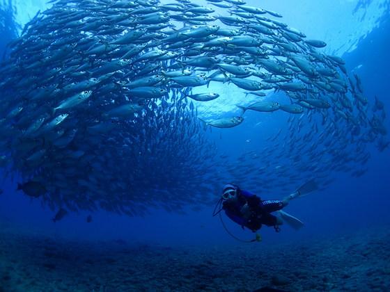 라오라오해변은 전갱이 떼와 함께 다이빙을 즐길 수 있다. 이번엔 아쉽지만 이런 장관은 못봤다. [사진 다이브Y2K]