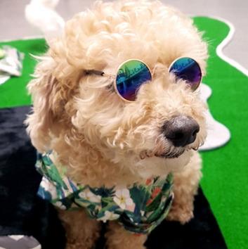 강아지용 선글라스, 품종마다 쓰는 제품이 다르다.