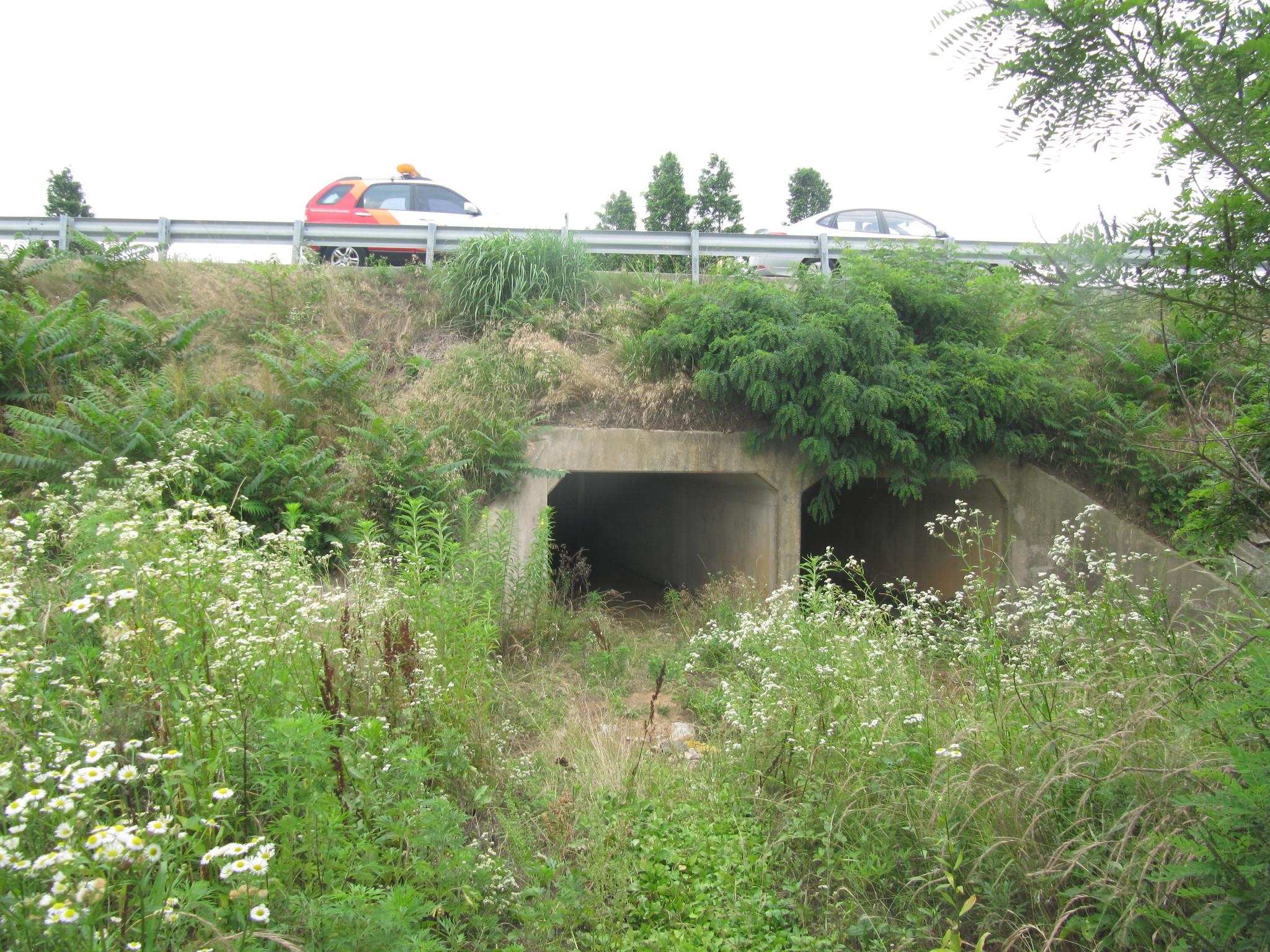 호남고속도로에 설치된 터널형 생태이동통로 [사진 국립생물자원관 한상훈 박사]