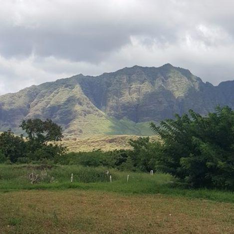 하와이 오아후섬 서쪽 카후마나 농장&카페. 한 바퀴 도는 데만 1시간 가까이 걸릴만큼 넓은 농장 뒤로 산이 병풍처럼 둘러싸고 있어 그림같은 풍경을 연출한다. 안혜리 기자
