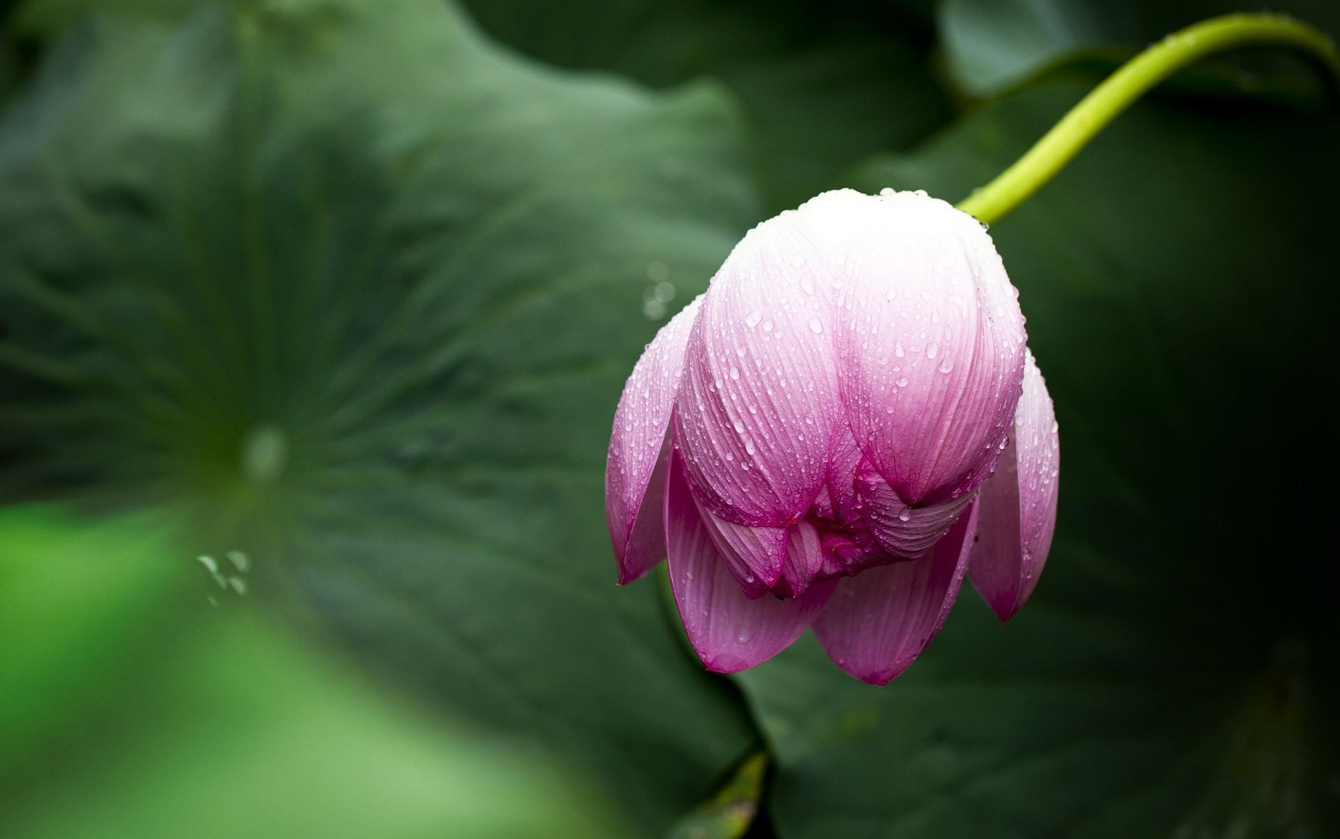 선악을 가르는 화살이 녹은 자리에 꽃이 핀다. 그 꽃의 이름은 '해탈'이다. 해탈의 꽃은 진흙에 물들지 않는다. 왜 그럴까. 더 이상 진흙이 없기 때문이다.
