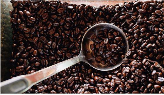 커피의 산미는 재배지역, 로스팅 강도, 생두의 가공방식에 따라 달라진다. [중앙포토]