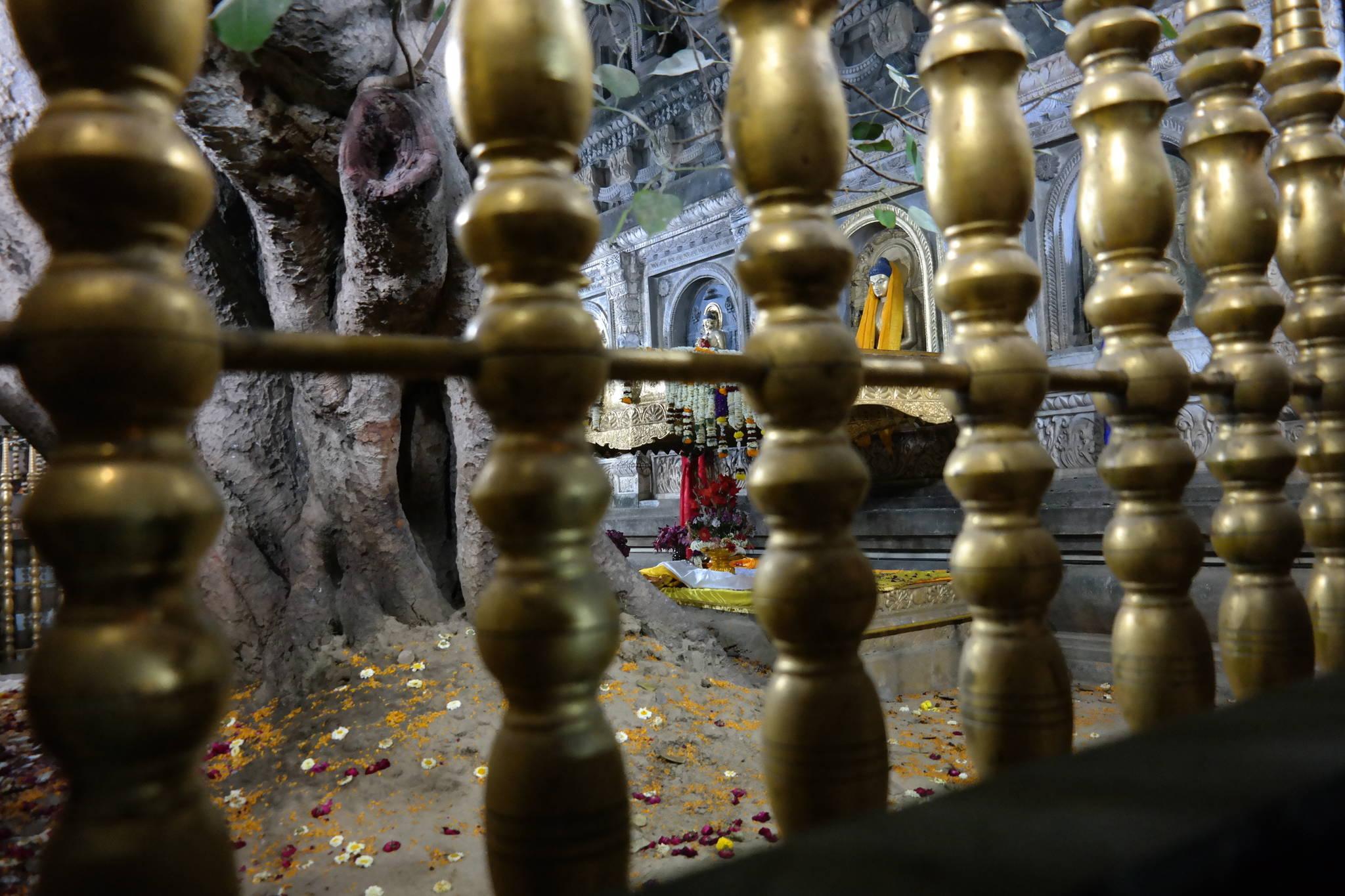 보리수 둘레에 세워진 울타리 사이로 싯다르타가 앉았던 금강좌가 보인다. 보리수 오른편 아래에 꽃들이 놓여 있는 사각의 돌이 금강좌다. 백성호 기자