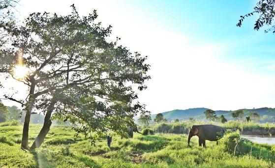 코끼리는 태국 여행의 강력한 콘텐트 중 하나다. 태국 북부 산간 지방 치앙라이와 치앙마이에 여행객에게 개방하는 코끼리 캠프가 많다.