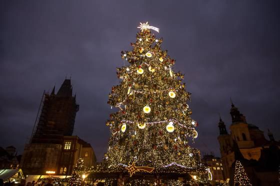 체코 프라하에 있는 크리스마스 마켓에 세워진 트리. [EPA=연합뉴스]