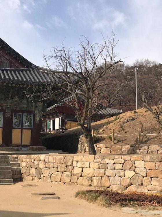 대구 팔공산 동화사 대웅전 주변의 모습. 김윤호 기자