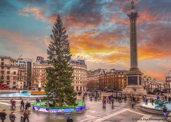 영국 런던 트라팔가르 광장의 성탄 트리. [flickr Chris Fay]