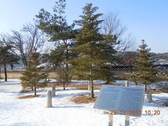 1999년 4월 한국을 찾았던 영국의 엘리자베스 2세 여왕이 안동에 기념으로 식수한 구상나무. [flickr verweiledoc]
