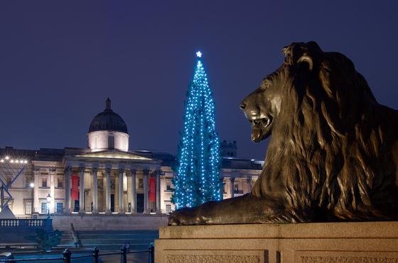 영국 런던 트라팔가르 광장 성탄 트리의 야경. [flickr Raphael Chekroun]