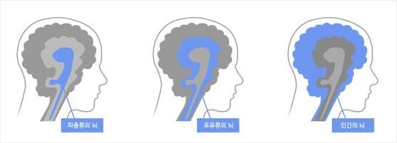 인간의 뇌는 3중으로 이뤄졌다고 한다. 생존과 본능에 대한 부분은 파충류의 뇌, 감정에 대한 것은 포유류의 뇌, 이성과 관련한 것이 인간의 뇌다. [네이버]
