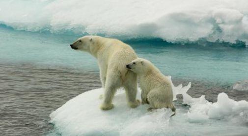 북극곰 어미와 새끼. [중앙포토]