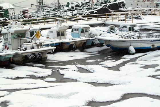 11일 오전 폭설과 한파가 이어진 가운데 전북 군산 내항에 정박한 어선 사이로 얼음이 얼어 눈에 덮여 있다. [뉴시스]