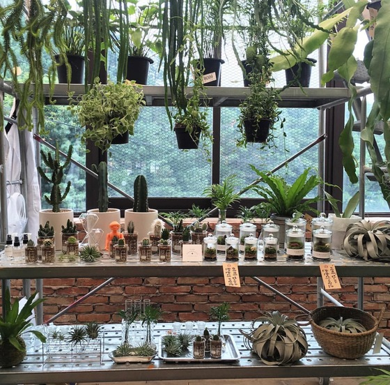 책장이나 철재 장 위에 작은 다육식물을 총총 모아 놓고 줄기가 길게 늘어지는 식물들을 걸어 놓으면 집안의 정원이 꾸며진다. [사진 슬로우파마씨]