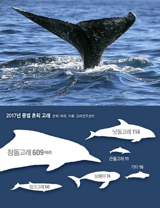 2017년 종별 혼획 고래