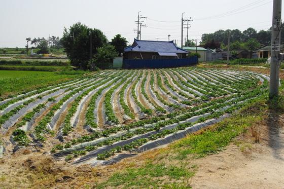 직불금은 농촌의 '13월의 보너스'다. 농업 종사자의 부족한 소득을 보전해주기 위해 마련된 제도이다. [사진 김성주]