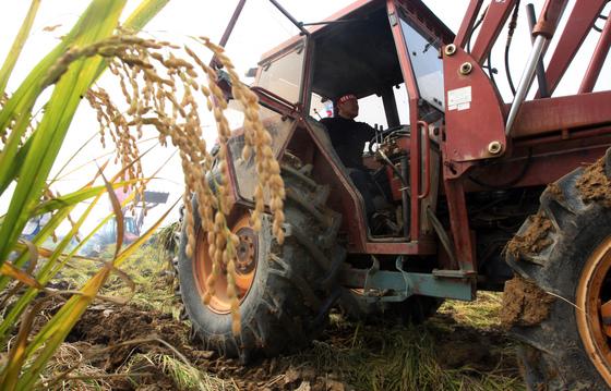 고위공직자들의 쌀직불금 불법 수령에 항의하는 한농연소속 회원들의 시위. 한농연 회원들이 트렉터를 이용해 논을 갈아엎고 있다. [중앙포토]