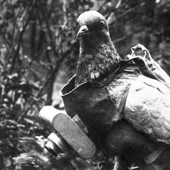 독일군은 제1차 세계대전 때 비둘기에 카메라를 달아 정찰에 투입했다. [사진 독일 연방 기록소]