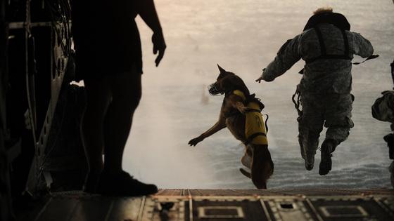 미 육군의 군견은 특수임무에 투입하기 위해 공수훈련도 받는다. [사진 미 공군]