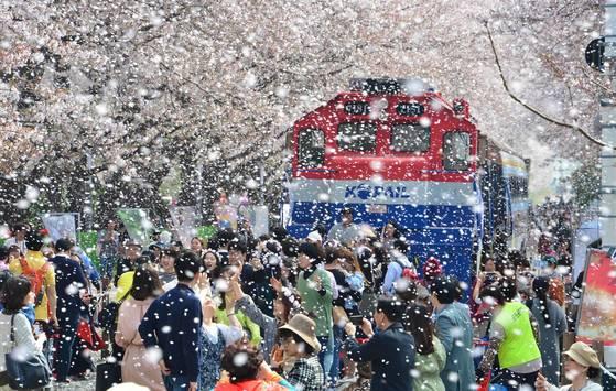 전국 최대의 벚꽃 축제인 진해군항제가 오는 4월1~10일 경남 창원 진해구에서 진행도니다. 지난해 경화역에서 함박눈처럼 흩날리는 벚꽃을 즐기는 사람들의 모습. [중앙포토]