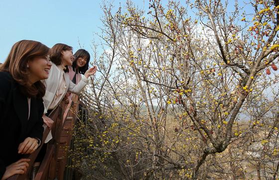 전남 구례군 산동면 반곡마을을 찾은 탐방객들이 노랗게 피어난 산수유 꽃을 바라보며 봄의 정취를 즐기고 있다. 프리랜서 장정필
