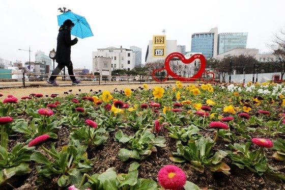 서울에 비가 내린 8일 오전 우산을 쓴 시민이 서울 성동구 왕십리역 주변 봄 꽃길을 걷고 있다. [뉴스1]