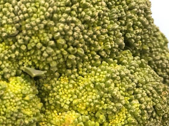 마치 잎처럼 보이는 브로콜리의 초록색 부분을 자세히 들여다 보면 좁쌀보다 작은 꽃봉오리가 수없이 모여 있음을 알 수 있다.