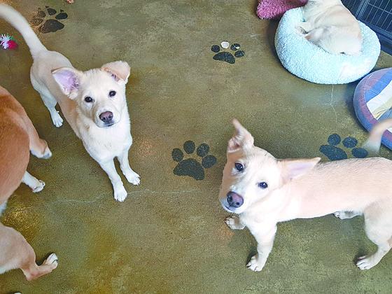 동물보호단체 카라에서 운영하고 있는 입양카페 '아름품'에서 지내는 개들이 카메라를 바라보고 있다. [김지아 기자]