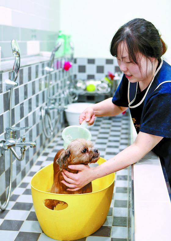 개를 목욕시키고 있는 활동가. [변선구 기자]