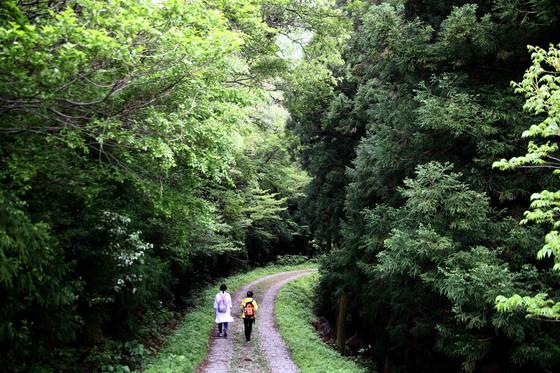 달마고도는 산을 에두르는 길이라 급한 오르막이나 내리막이 없어 걷기 편하다.
