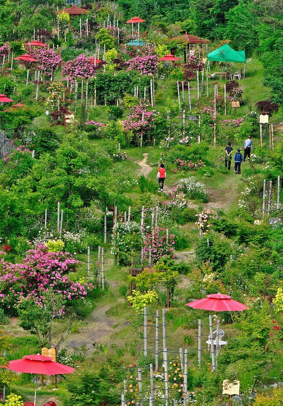 국립수목원 '가보고 싶은 정원 100'…다섯 곳만 꼽는다면?
