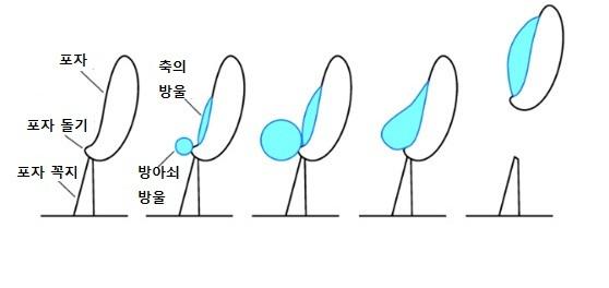 버섯 포자의 확산 방법. 두 물방울이 표면장력에 의해 합쳐지는 힘을 이용해 포자를 발사한다. [중앙포토]