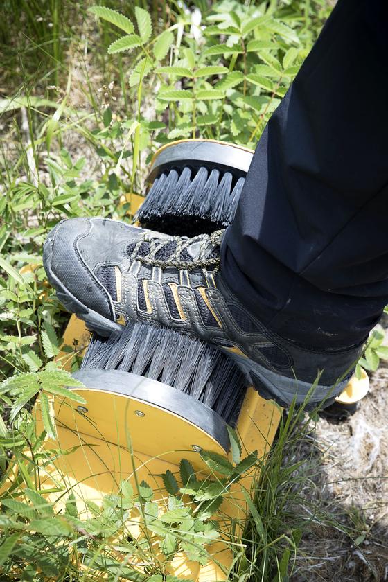 용늪에 들어가기 전에는 신발을 털어야 한다. 탐방객의 신발을 통해 외지 식물이 들어올 수 있어서다. [장진영 기자]