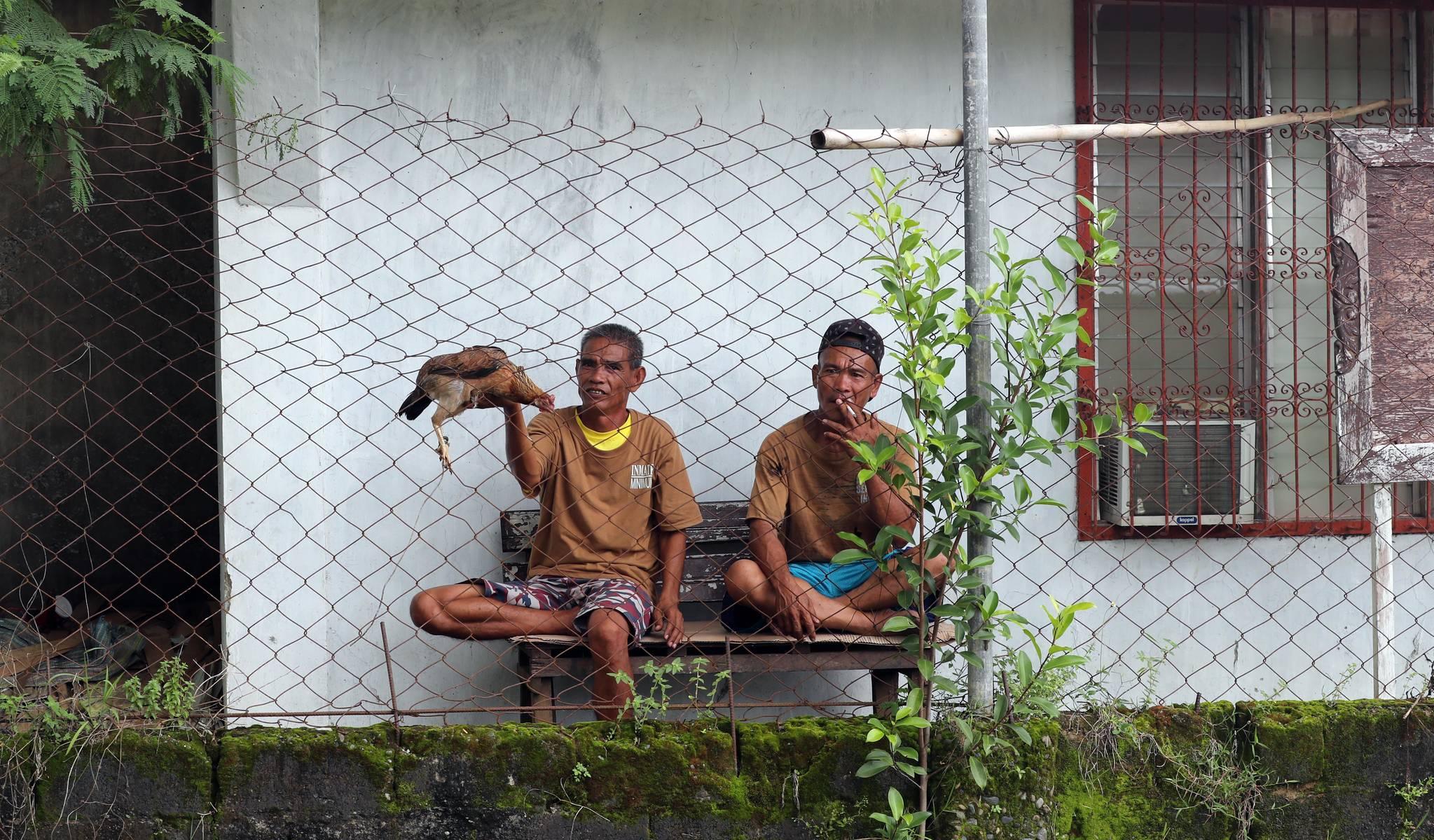 한 죄수가 팔라완 이와힉 개방형 교도소에서 자신이 키우는 닭을 보여주고 있다. 변선구 기자
