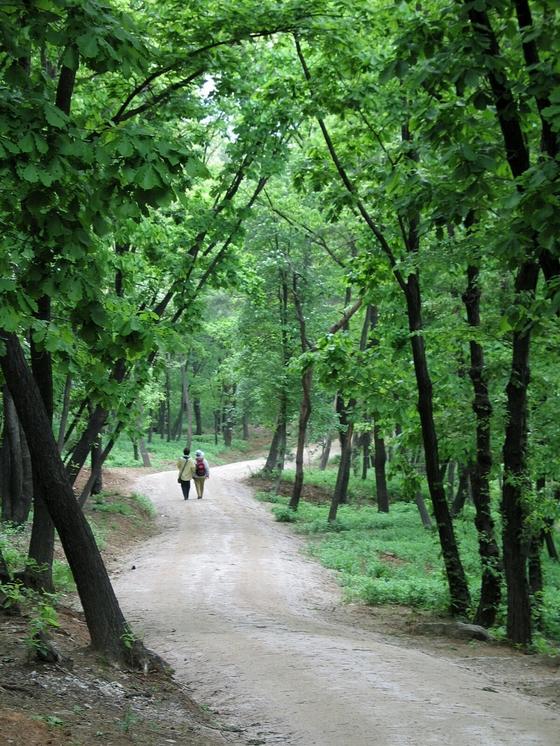 서오릉은 숲이 울창해 산책하기에 좋다. [사진 김순근]