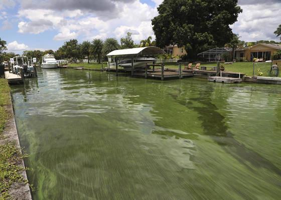 지난 10일(현지시간) 미국 플로리다 오케초비 호수에서 있는 녹조류가 수로를 따라 흐르고 있다. [AP=연합뉴스]