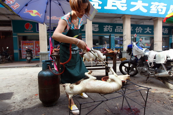 Dog Meat Bred For Food